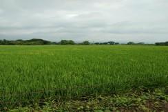 Farm Lot 4 HAs, Titled in Pampanga