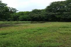Mango Farm 17 HAs in Pampanga FOR SALE
